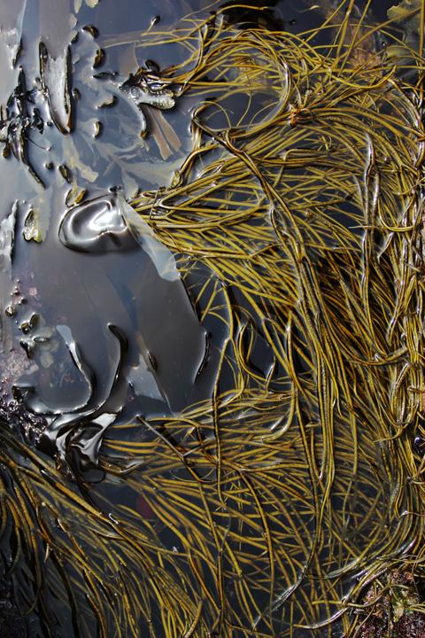 seaweed006