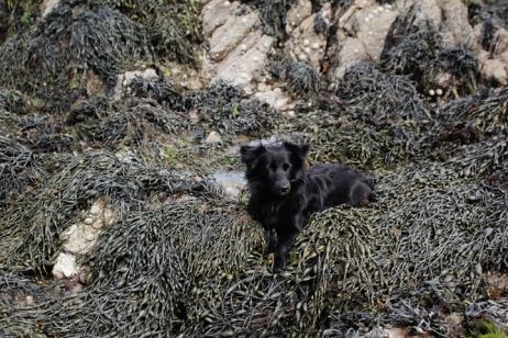 seaweed017