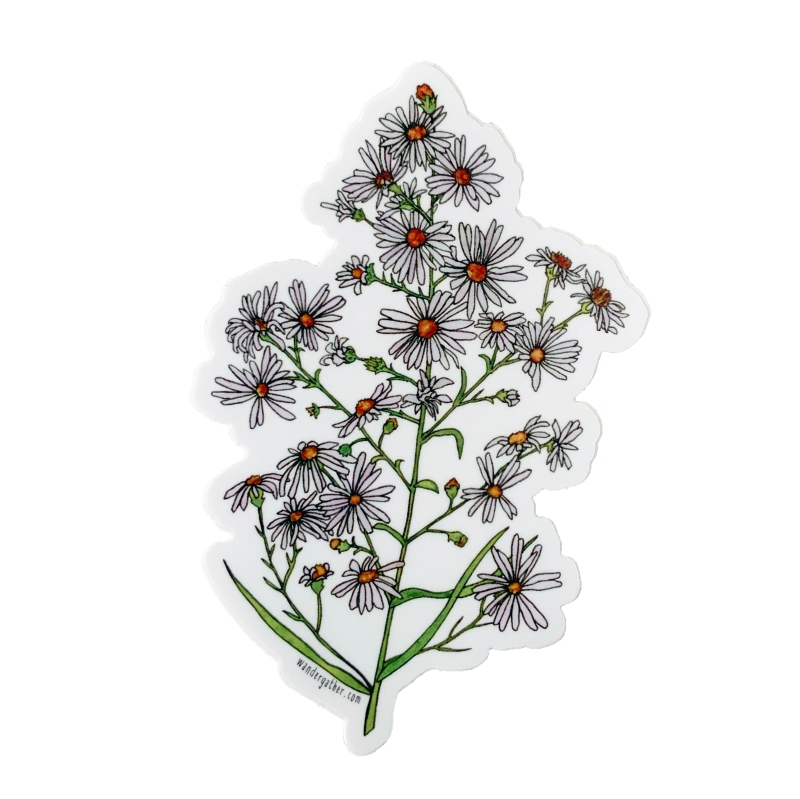 Aster wildflower vinyl sticker