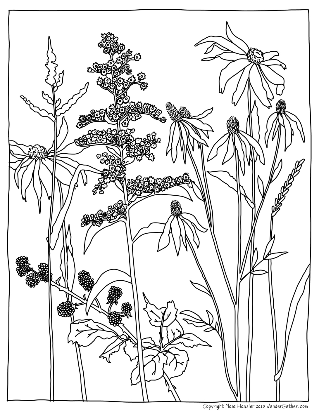 Wildflower Coloring Page Copyright-01